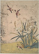 Birds and Narcissus