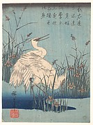 Egret in Iris and Grasses