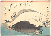 Hirame and Mebaru Fish with Cherry Blossoms, from the series Uozukushi (Every Variety of Fish)