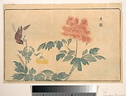 Chinese Oriole and Peonies