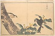 Bai tou weng