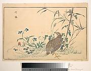 Zhu ji
