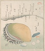 Awabi (Ear-Shell) and Various Shells