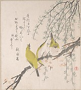 梅と柳に目白