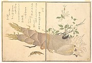 Mole Cricket (Kera); Earwig, (Hasami-mushi), from the Picture Book of Crawling Creatures (Ehon mushi erami)