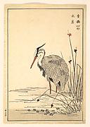 Gray Heron (Aosagi) and Mizu-aoi Plant