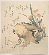Pair of Mandarin Ducks and Iris Flowers