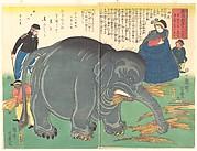 Recently Imported Big Elephant