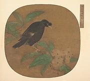 Minah Bird on a Loquat Branch