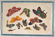 Album Containing Twelve Paintings of Insects