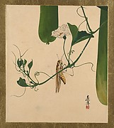 Lacquer Paintings of Various Subjects: Grasshopper on Gourd Vine