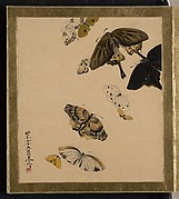 Lacquer Paintings of Various Subjects: Butterflies