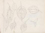 現代   謝稚柳   葉片畫稿   冊頁<br/>Leaf Studies