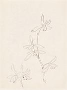 現代   謝稚柳   蘭圖   冊頁<br/>Orchids