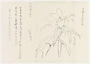 現代   謝稚柳   黃玉蘭圖   鏡片<br/>Michelia