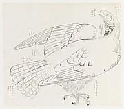 現代   謝稚柳   鷹圖   鏡片<br/>Hawk