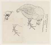 Studies of a Bird