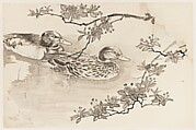 Ducks and Blossoming Branches