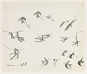 Birds&amp;#39; Feet
