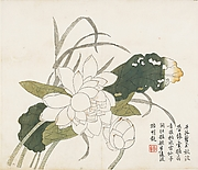 Jiezi yuan huazhuan<br/>Lotus Flowers, Leaf from the Mustard Seed Garden Painting Manual, part 3
