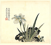 Jiezi yuan huazhuan<br/>Iris and Rock, from  Mustard Seed Garden Manual of Painting, Part 3