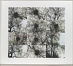 Untitled (Nest/Trees)