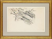 Large Pine, Study