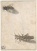 A Grasshopper and a Bee