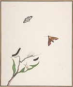 A Caterpillar and Two Moths on a Branch and Two Butterflies