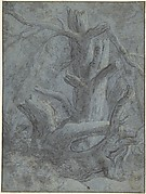 Study of a Blasted Tree Trunk and Branches