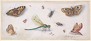 Insects, Butterflies, and a Dragonfly