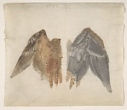 Bittern&#39;s Wings: study showing both sides
