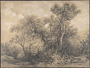 Trees (recto); Soldiers in a Wood (verso)