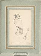 A Raven Perched on a Rail