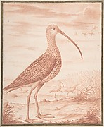 Curlews and Ducks