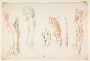 Anatomical Studies of Legs