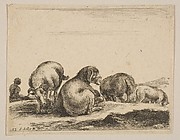 Sheep and Ram in a Pasture