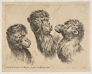Three Camel Heads