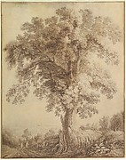 A Large Tree at Albano