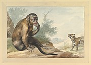 A Monkey Sitting on a Rock Looking at a Civet