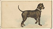 German Mastiff, from the Dogs of the World series for Old Judge Cigarettes