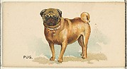 Pug, from the Dogs of the World series for Old Judge Cigarettes