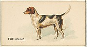 Fox Hound, from the Dogs of the World series for Old Judge Cigarettes