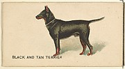 Black and Tan Terrier, from the Dogs of the World series for Old Judge Cigarettes
