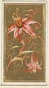 Tiger Lily (Lilium superbum), from the Flowers series for Old Judge Cigarettes