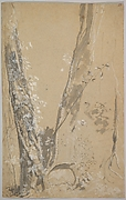 Study of Overgrown Trees; verso: Study of a Cypress and Two Overgrown Trees