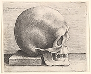 Right Profile of the Skull