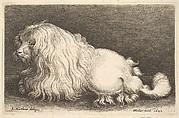 A Poodle or Lapdog