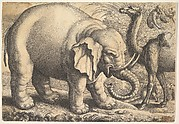 Elephant and Camel
