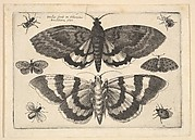 Two Moths and Six Insects, from Butterflies and Insects, Muscarum scarabeorum